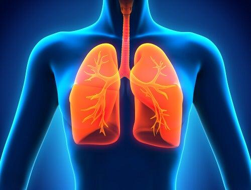 Polmoni e respirazione