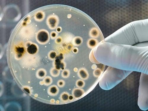 piangere fa bene contro i batteri