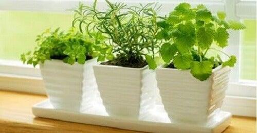 10 piante che attraggono energia positiva
