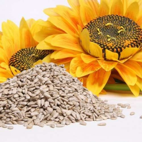 i semi di girasole possono aiutarci a smettere di fumare