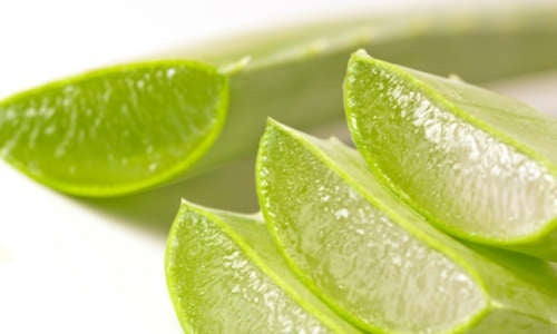 Aloe-vera per combattere il bruciore di stomaco