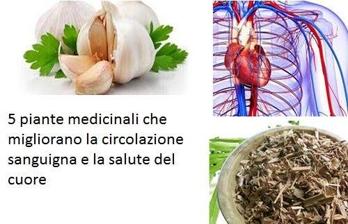 5 piante medicinali che migliorano la circolazione sanguigna e la salute del cuore