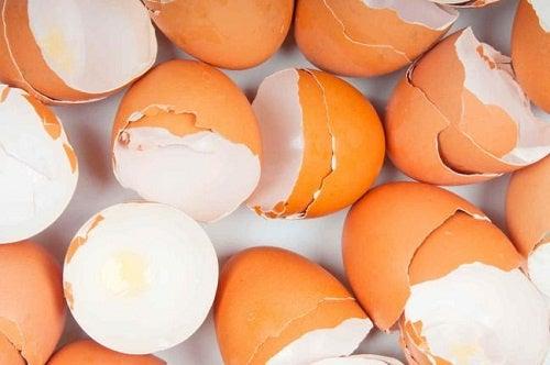 Gusci delle uova: 17 sorprendenti usi
