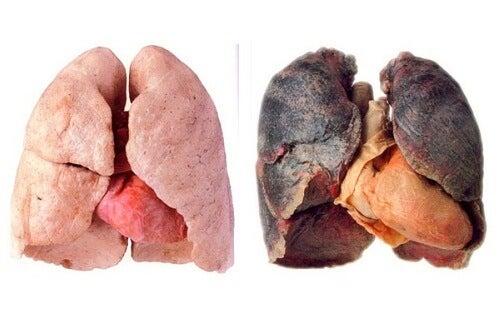 Consigli per avere polmoni più puliti