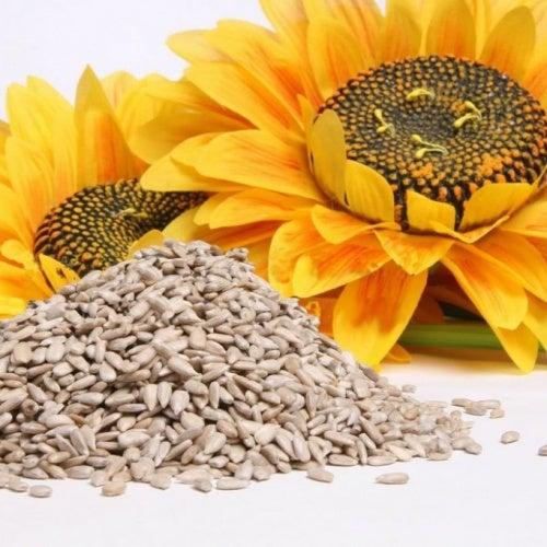 semi di girasole fonte naturale di calcio
