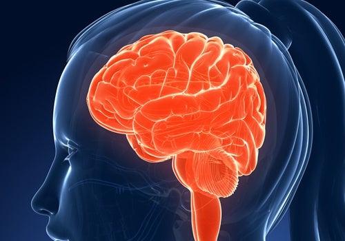 il cervello occupa il 2% del corpo, ma consuma il 20% del glucosio che si ingerisce ogni giorno