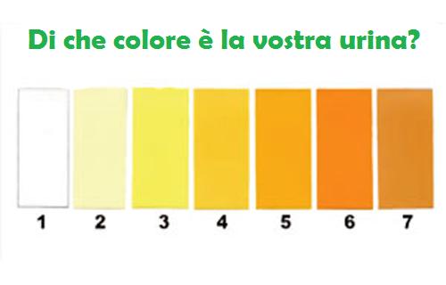 Colore urina