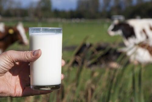 Perché non dovremmo bere latte vaccino?