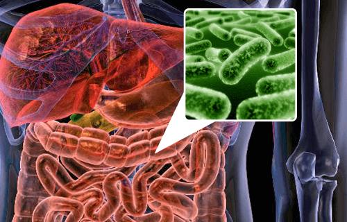 5 alimenti per riequilibrare la flora intestinale