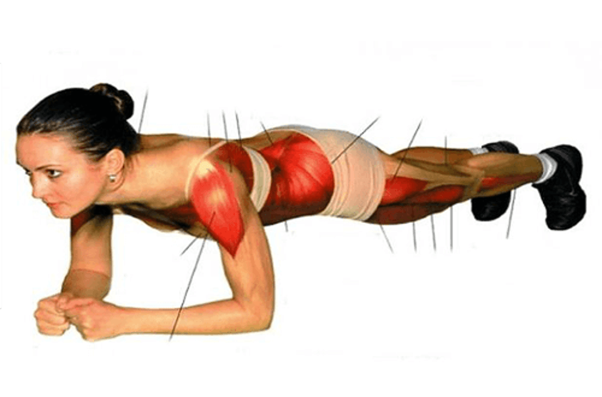 Fare Il Plank L Esercizio Addominale Per Tutto Il Corpo Vivere Più Sani