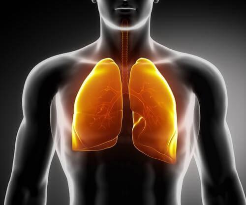 Rafforzare i polmoni con 3 infusi medicinali