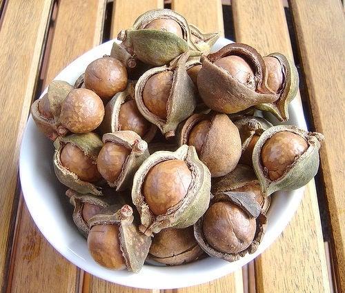 Benefici-delle-noci-di-Macadamia