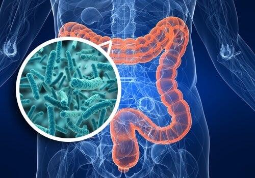 Sindrome da contaminazione batterica del tenue: sintomi e alimentazione