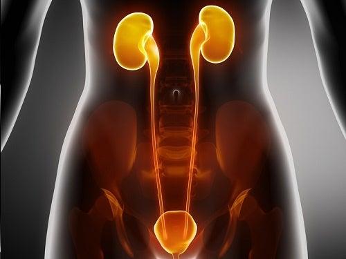 Rimedi naturali per le infezioni del tratto urinario