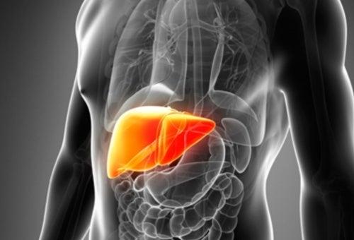 Pulire e depurare il fegato: 7 motivi per farlo