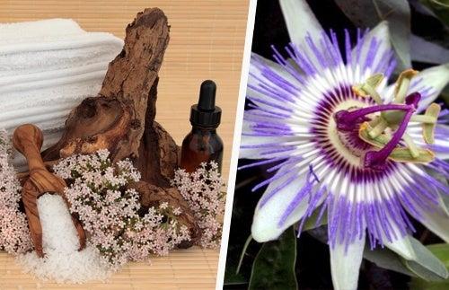valeriana-passiflora-500x323