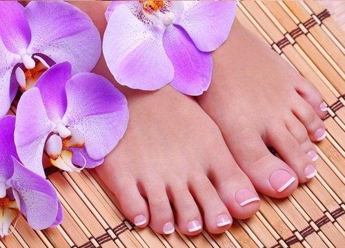 orchidee accanto ai piedi