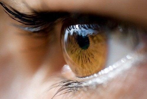 colore-degli-occhi-500x339