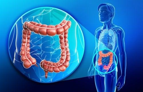 Frullato antinfiammatorio e riparatore per l'intestino