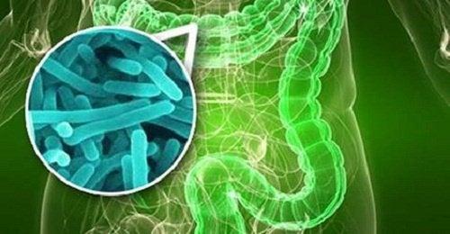 Batteri dell'intestino