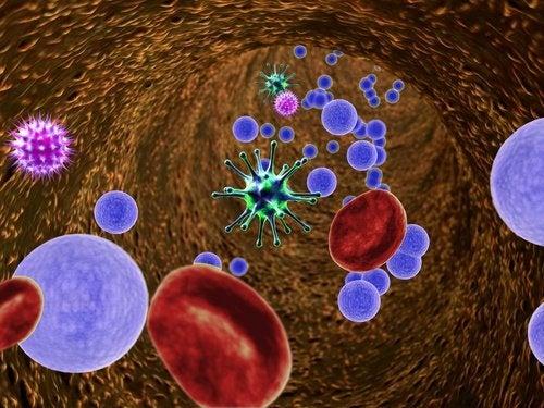 I batteri dell'intestino colpiscono il sistema immunitario