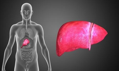 il consumo di zenzero e cannella è in grado di stimolare la pulizia del fegato