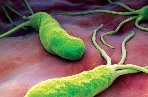 Combattere il batterio che causa bruciore, diarrea e gonfiore