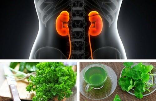 I migliori infusi per migliorare la funzionalità renale
