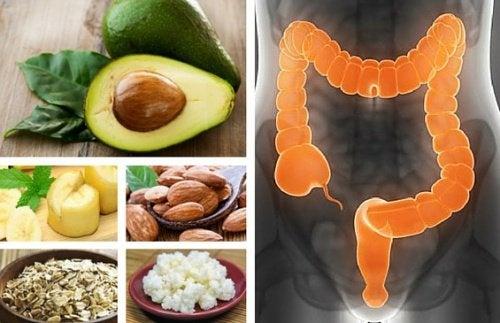 dieta irritabile diarrea intestinale