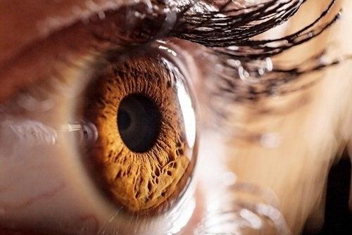 occhio umano2