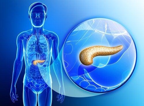 depurare e rivitalizzare il pancreas