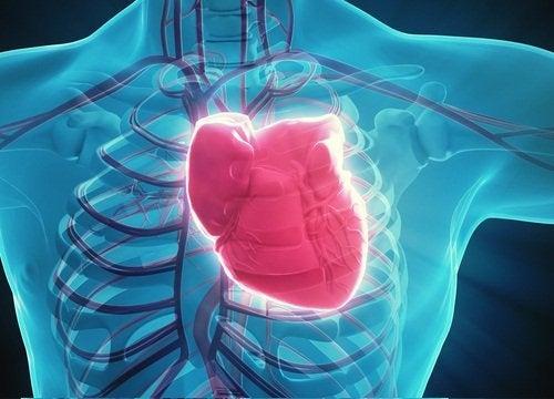 cuore colpito dallo stress