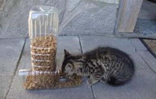 Dispenser-cibo-animali