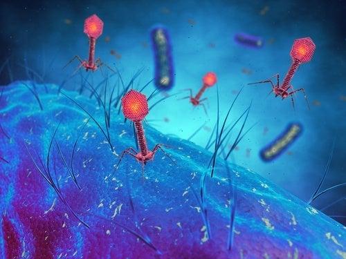 virus batteriofagi e batteri