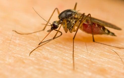 Perché alcune persone attirano le zanzare più facilmente?