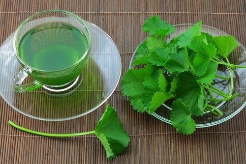 l'infuso di semi di sedano possiede qualità diuretiche e antinfiammatorie