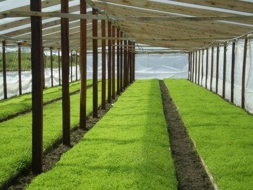 coltivazione piantine in serra