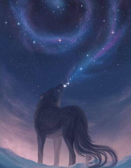 bellezza lupo