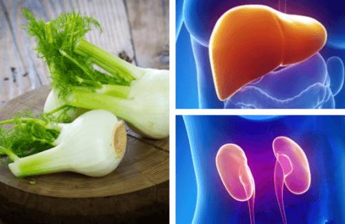 Il finocchio per curare fegato e reni