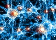 neuroni cervello