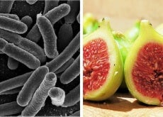 batteri e fichi