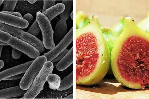 Trattamento a base di fichi per eliminare i batteri dallo stomaco