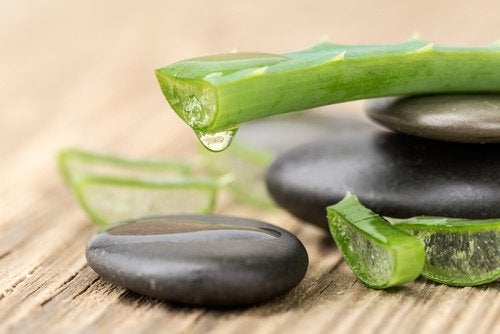 foglie di aloe e pietre piatte