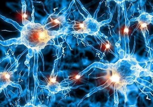cellule nervose mentre dormiamo