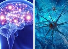 cervello e neuroni