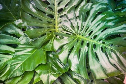 5 piante da interni che potrebbero rivelarsi pericolose for Bruciore alla schiena in alto