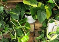 piante ornamentali per casa