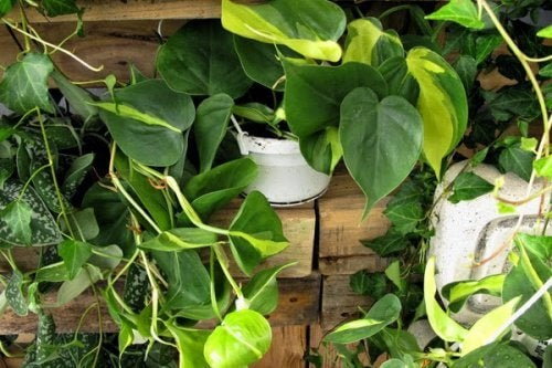 5 piante da interni che potrebbero rivelarsi pericolose
