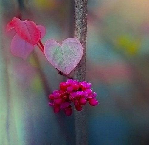 foglia a forma di cuore