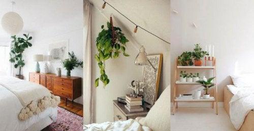 Piante da mettere in camera da letto — Vivere più sani
